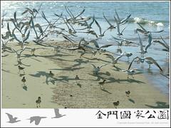 裏海燕鷗-01.jpg