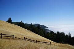 Mount Tamalpais: Rock Spring to Stinson Beach Hike (8) (Planet Q) Tags: mttam marinheadlands