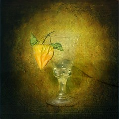 Still-Life,Physalis (Arunas S) Tags: light stilllife colour reflection texture glass evening expression antique calm baltic lithuania naturemorte physalis lietuva palanga arunas sonydscr1 top20clonepics natiurmortas arttex