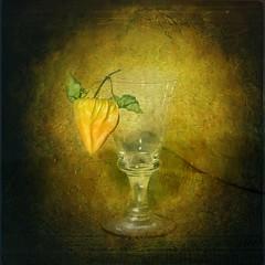 Still-Life,Physalis (Arunas S) Tags: light stilllife colour reflection texture glass evening expression antique calm baltic lithuania naturemorte physalis lietuva palanga arunas sonydscr1 top20clonepics natiurmortas arttex