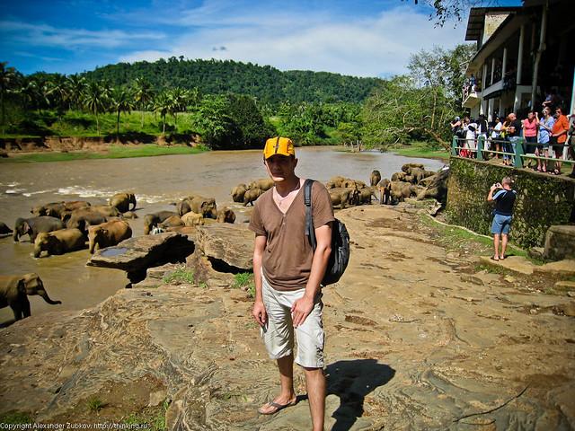 Я и слоны