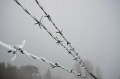 Frosty Barbed-Wire DSC_0874 by Mully410 * Images