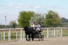 100_4557 (obsidianmoonranch) Tags: horses horse equestrian equine friesian horsemanship carriagedriving