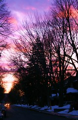 Sunset Street ..............Explore #303 Feb.6th (bigbrowneyez) Tags: road pink blue trees winter sunset sunlight white snow black cold colour cars nature beautiful lines silhouette night outdoors downtown purple dusk branches atmosphere headlights sidewalk area designs quaint streaking intricate treetrunks sunsetstreet flickrdawn bitsofsunlight outdoorsilhouette mygearandme explore303feb6th20011