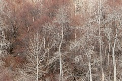 winter-trees-red-white