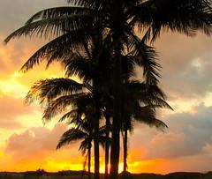 Sunrise on South Beach (Colorado Sands) Tags: morning trees usa beach silhouette america sunrise palms dawn us arboles unitedstates florida earlymorning silhouettes palmtrees fl silueta miamibeach bume southbeach eastcoast rvores southflorida sobe palmeira pokok silhuetas bumen miamidadecounty sandraleidholdt leidholdt gettysales