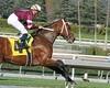 Tapizar (kimpossible pics) Tags: horse jockey racehorse thoroughbred arcadia equine santaanita santaanitaracetrack garrettgomez tapizar robertblewisstakes steveasmussen hprseracing winchellthoroughbreds