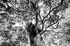 Hang Out in the Trees for a While (Thomas Hawk) Tags: california bw usa unitedstates unitedstatesofamerica treehouse southbay menlopark natureshand silberstudiostv penninsulaschool photowalk06262010