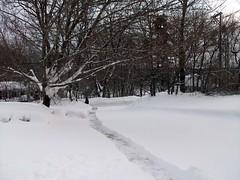 Snow_12711d_Matt