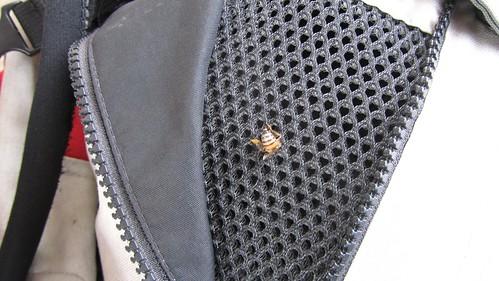 Chest bee
