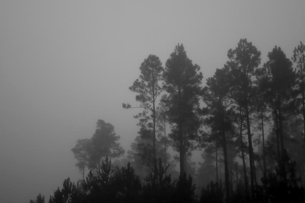 B&W 16/28:  Fog