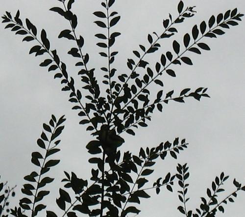 phsillvbr9100