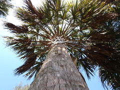 Wide palm (Fernando Lenis) Tags: pen lens photos olympus fernando 918 lenis epl1