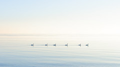 Sunrise (Poxonaut) Tags: morning blue winter sky orange sun cold bird animal yellow strand sunrise landscape denmark geese swan view horizon himmel peaceful balticsea gelb sight blau kalt sonne schwan sonnenaufgang ostsee morgen horizont tier vogel langeland sicht dnk friedlich gaensevogel dkdaenemark
