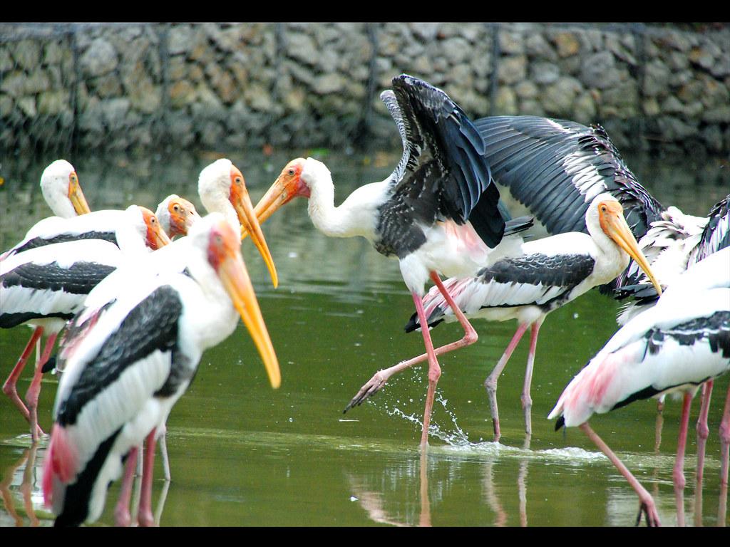 zoo negara birding!