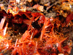 Crocoite (The Resistance Image Library) Tags: red color nature beauty rock museum compound nice pretty gallery natural display personal crystal australia structure collection minerals mineral tasmania colourful dundas information lead interest naturalwonders element specimen collector reference chemical inorganic crystalline geological chromium crocoite mineralogy chromate locality rockhound top20colorpix mineralogical sulphate crystallinestructure monoclinic naturallyoccurring adelaidemine geometricspatialarrangement resistance2010