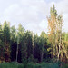 This I photographed the forest near Moscow a very hot summer during the tour on bikes with my friends.