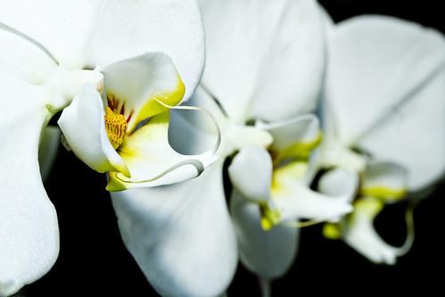 APC 2 - Orchids