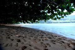 Convergence (Rendiru) Tags: ocean tree beach hawaii bay sand kauai hanaleibay