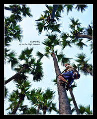 Climbing up to the heavens (PNike (Prashanth Naik)) Tags: trees sky india green nikon wine drink palm ap toddy vizag vishakapatnam palmwine andhrapradesh visakhapatnam d3000 visakhapatna pnike stunningphotogpin