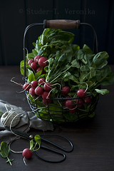 Radish (StuderV) Tags: food green contrast vintage nikon basket vegetable fresh scissors radish twine foodphotography foodstyling d700 tabletopstyling