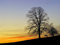 Sunset Trees (BlueRidgeKitties) Tags: sunset tree silhouette northcarolina blueridgeparkway westernnorthcarolina southernappalachians ccbyncsa moseshconememorialpark canonpowershotsx10is