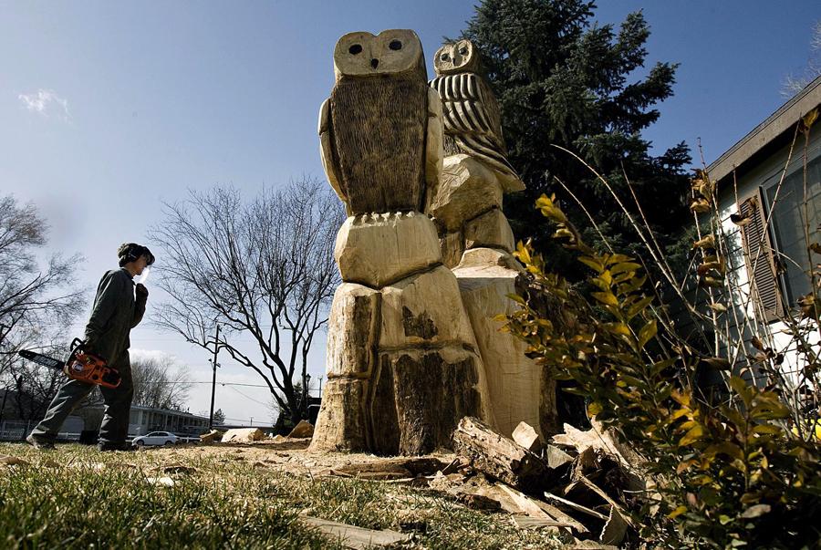 owl dg 101