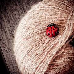 Day Six: Yarn Bug For Abby (j.edward ferguson) Tags: ri usa monochrome newengland yarn rhodeisland button tinted selectivecolor pawtucket laybug flickraward