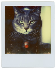 PX680  tests (Cea tecea) Tags: test film cat polaroid instant 680 impossible