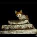 Sphinx Reincarnated!