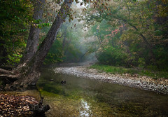 Busiek Creek (blair4bears) Tags: autumn forest landscape deer theselection importedkeywordtags busiekpark