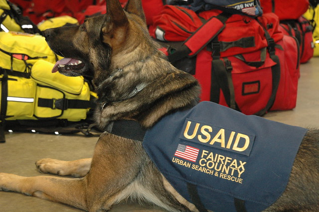 One of six Virginia Task Force 1 dogs being deployed on search and rescue efforts in Japan.