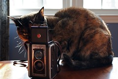 Shoot the Shooter?? (Read2me) Tags: camera pet animal cat play shoottheshooter x3 x2 bigmomma gamewinner challengeyouwinner 3waychallengewinner flickrchallengegroup flickrchallengewinner 15challengeswinner favescontestwinner challengegamewinner friendlychallenges thumbsupwinner thechallengefactory faveswinner unamourdechat ultimategrindwinner yourock1stplace agcgwinner gamex2winner herowinner superherochallengewinner ultraherowinner storybookwinner storybookchallengegroupotr storybookchallengegroupttw gamex3winner anythinggoeschallengewinnersweep pregamewinner storybookttwwinner agcgcrmedelacrmewinner agcgsweepchallengewinner agcgcrmeofthecropchallengewinner fromyour1stpage ispywinner challengeclubwinner