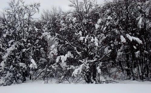 Schnee Sk 3