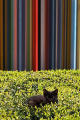 Kitten and stripes - La Defence - Paris - France (tom.wright) Tags: city blue red orange sun plant black paris france colour green yellow vertical cat fur duct grey furry kitten europe box district pipe stripe fluffy line business hedge raymond colourful defence striped ventilation ladefence sunbathe tomwright businessdistrict canonefs1785mmf456isusm morretti copyright2010 raymondmorretti