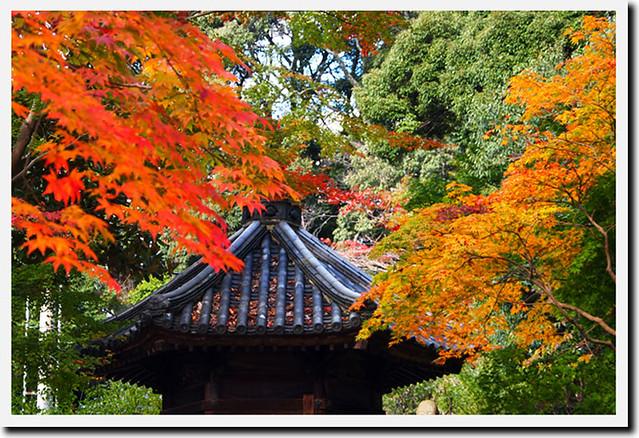 20101118_135937_當麻寺