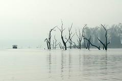 submerged trees in the Kabini River (LaylaLee) Tags: park india national gandhi karnataka rajiv