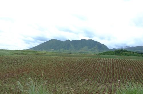 Negros-San Carlos-Bacolod (135)