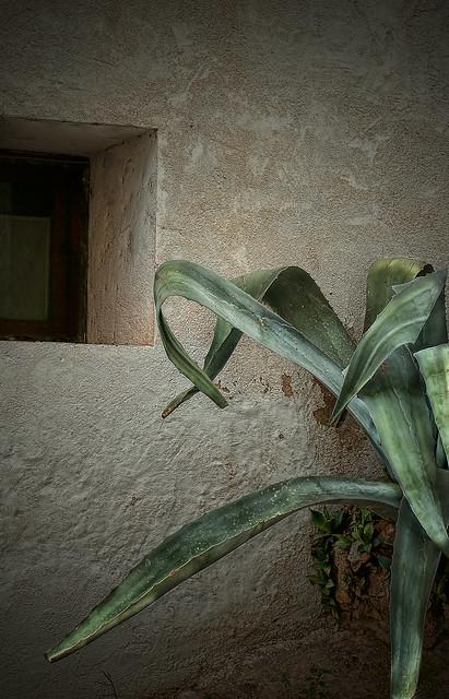 La huida sutil de Mr. Kaktus