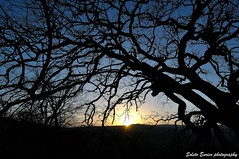 the branches of Hope... (Soleto Enrico photography) Tags: trees sunset sun landscape tramonto sole albero paesaggi sicilia quercia palazzoloacreide nikon1224 soletoenrico