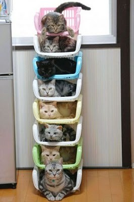 organize_your_cats_14
