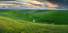 Green Green Grass of Home: Dunnigan Hills, California (Ivan Sohrakoff) Tags: sunset panorama green landscape spring stream wheat farming fields grasses yolocounty dunnigan yolo landscapephotography dunniganhills ivansohrakoff ivansohrakoffphotographic isophotographic dunniganhillspanorama yolocountysunset yolocountyphotography