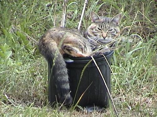 Catnip bucket