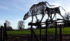 BarbedWireArt (Hodd1350) Tags: leica trees sky grass dorset barbedwire chettle vlux1 telrphonewires