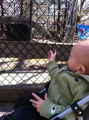 An Andean bear that Logan has identified as