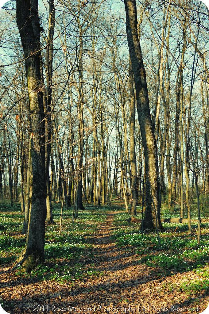 Spring Forrest Veyrier 1.1 bis