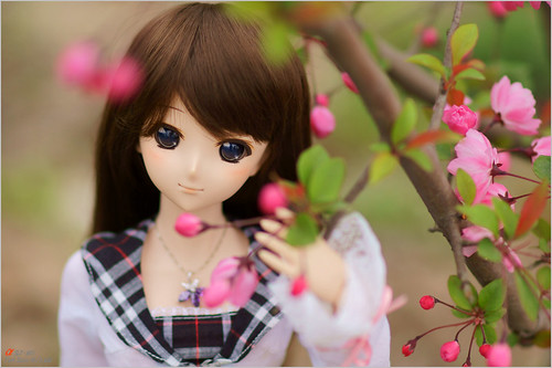 DSC04987 by leafsama
