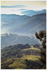 Canyon Ridge Portrait (LifeLover4) Tags: california usa nature fog forest canon outdoors oakland interestingness interesting hiking canyon hike explore getty eucalyptus redwood huckleberry sibley ebrpd explored 550d ef85mmf18usm umbellulariacalifornica t2i onearthnrdc ebparksok lifelover4 photocontesttnc11 stickneydesign californiatnc11
