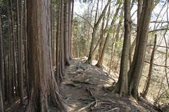 市道山から醍醐丸への道