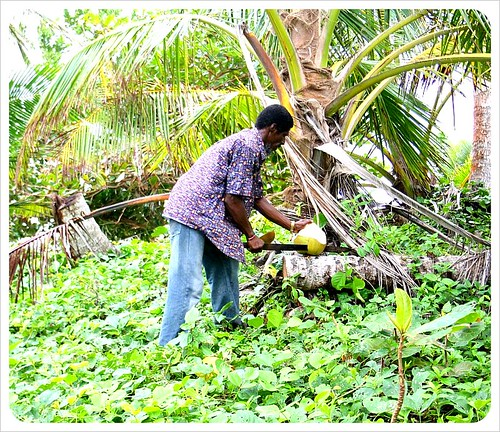 Frank cutting coconuts on Little Corn Island